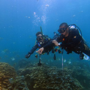 Discover Scuba Diving in Fujairah - 1 Dive